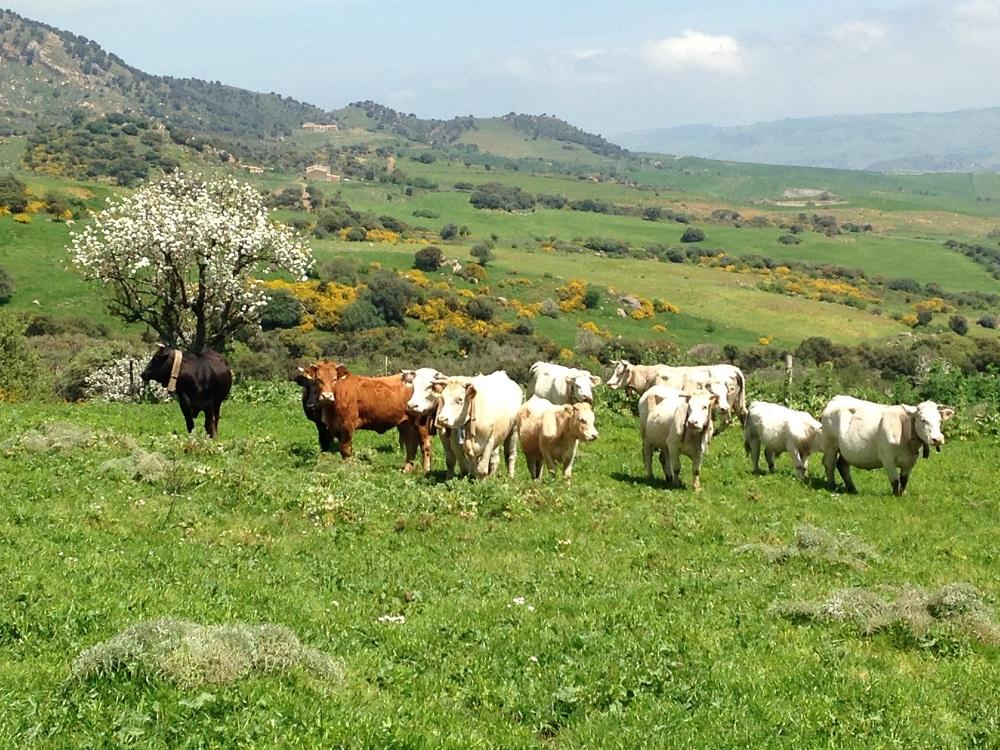 paesaggio-rurale-sicilia