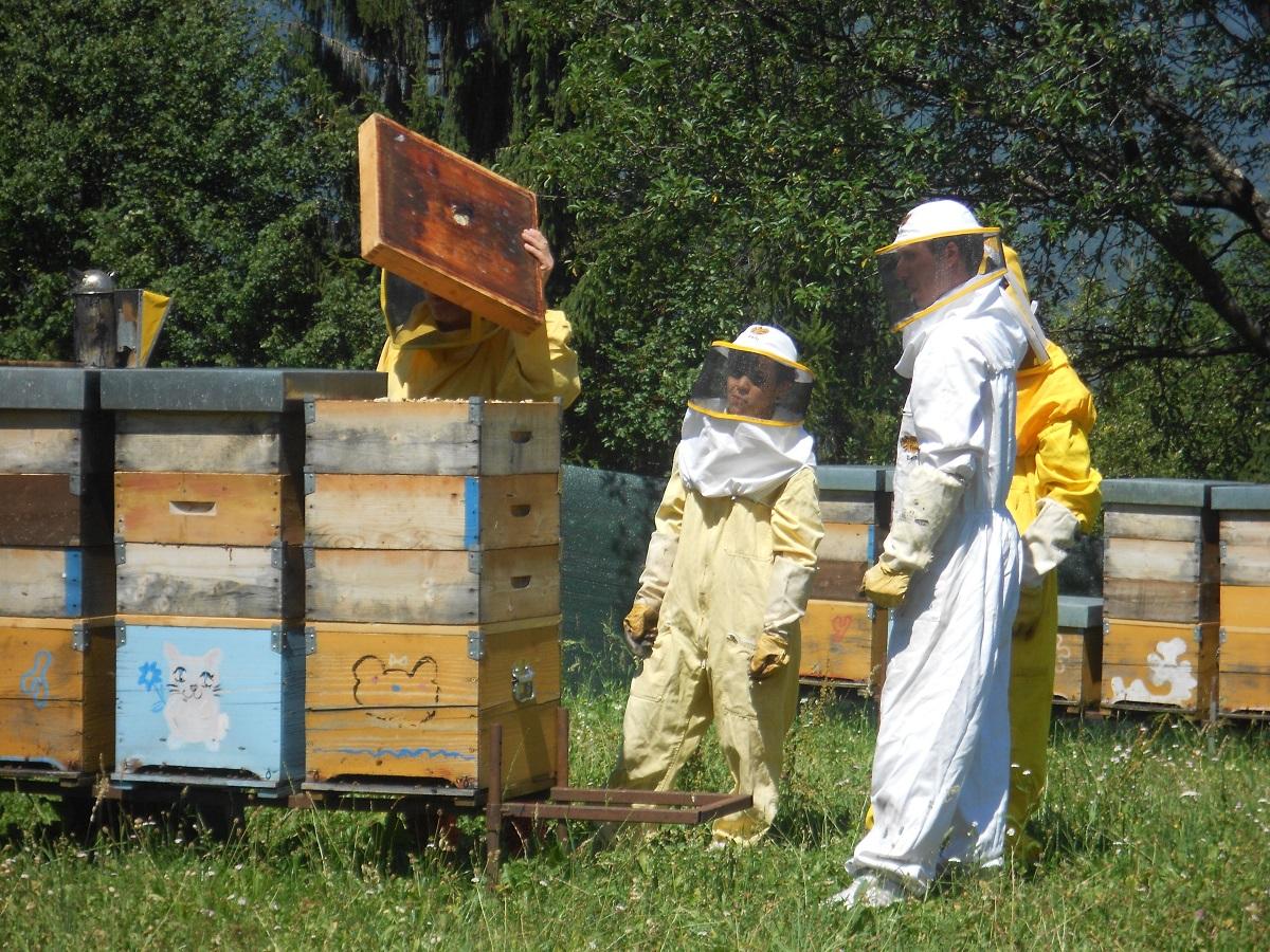 giovani-apicoltura