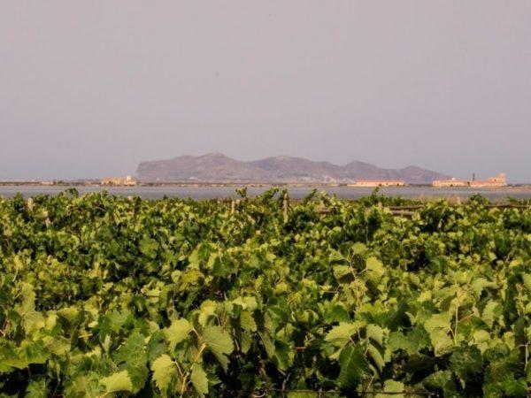 degustazione-vini-Marsala