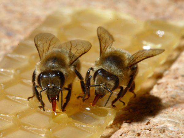 apicoltura-naturale