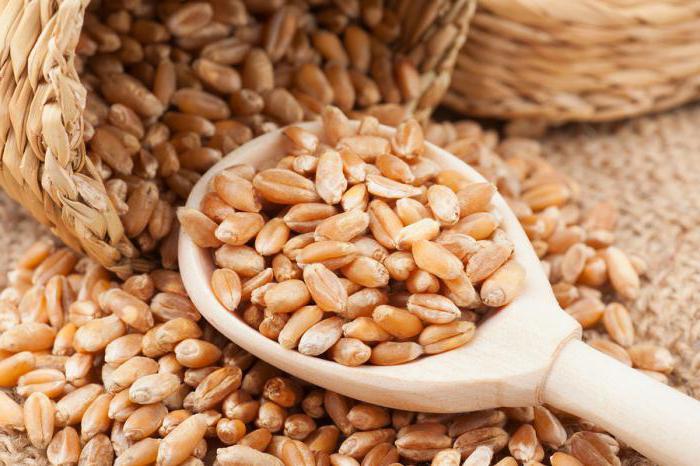 grano-contaminato