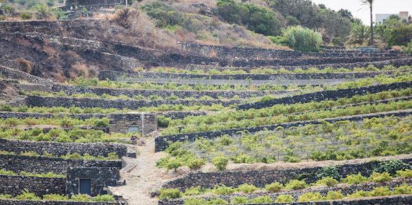 Terrazzamenti Pantelleria piccolo