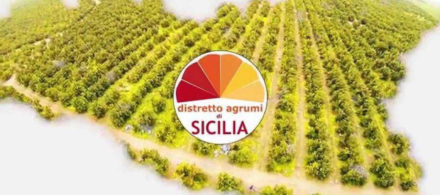 """Distretti produttivi rimandati a settembre. E Agrumi di Sicilia vuole """"cambiare casa"""""""