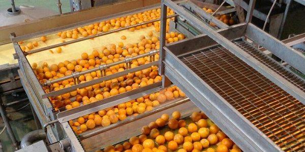 avorazione agrumi Oranfrizer