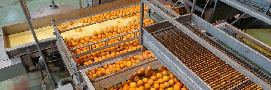 Etica e legalità nel comparto agrumicolo. Oranfrizer e Coa siglano un protocollo