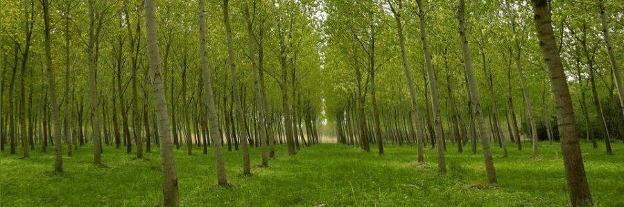 graduatorie forestazione