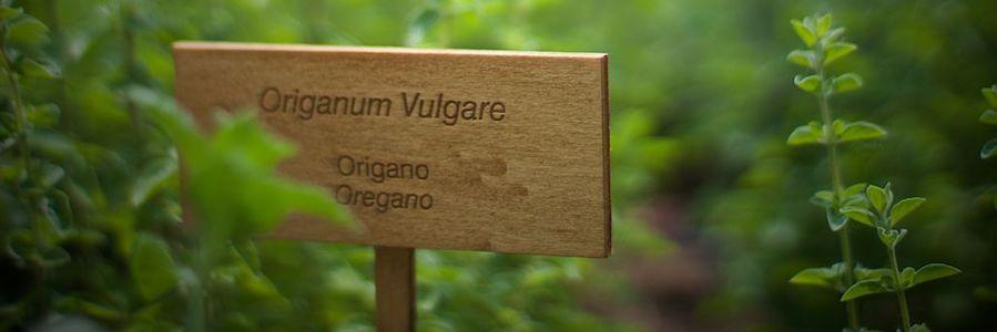 piante officinali
