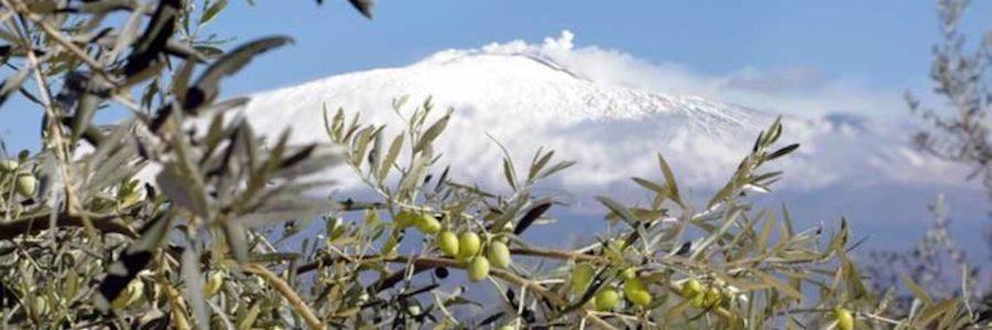 Dop Monte Etna