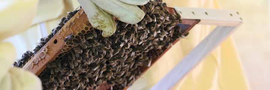 apicoltura 2