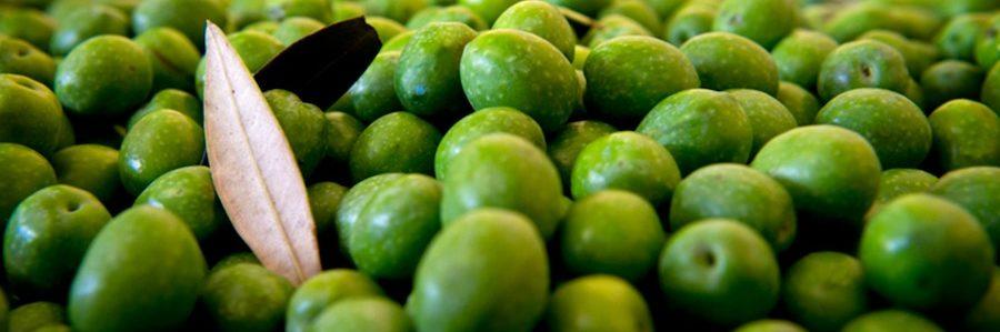 olio evo dieta mediterranea