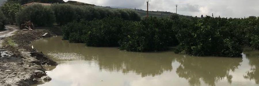 declaratoria-agrumeto-alluvione