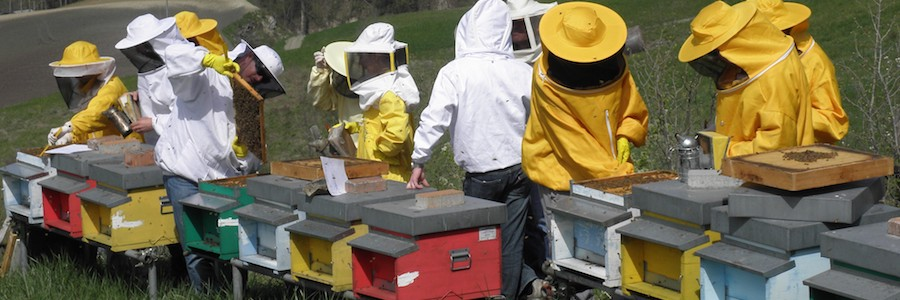 api corso primo livello