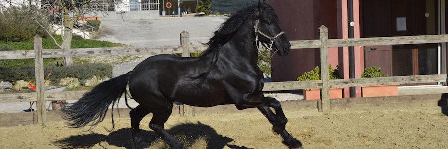 Cavallo Sanfratellano, domenica 7 ottobre la 60esima mostra-mercato