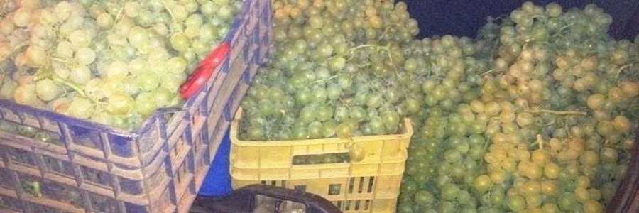 furti d'uva