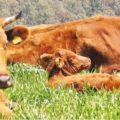 Consorzio Carni di Sicilia