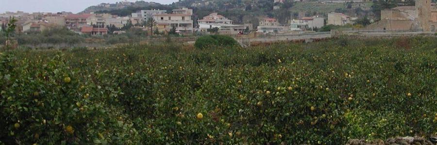 agrumeti storici Bagheria