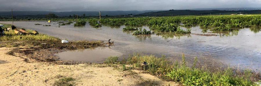 danni da piogge battenti e alluvione