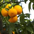 sprechi arance