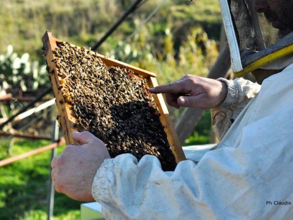 corsi per apicoltori