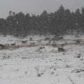 neve e gelo 3