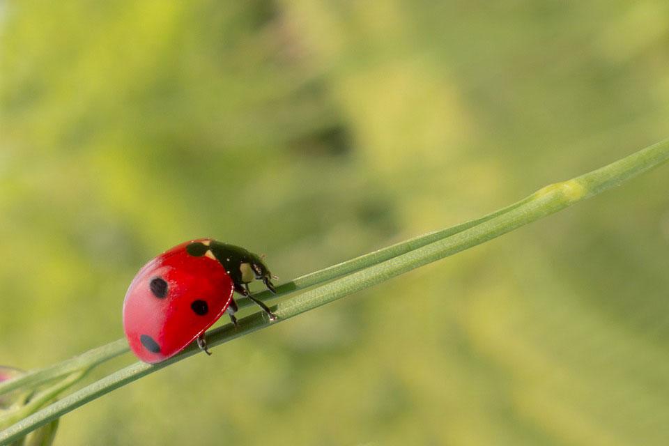agricoltura biologica Montecitorio