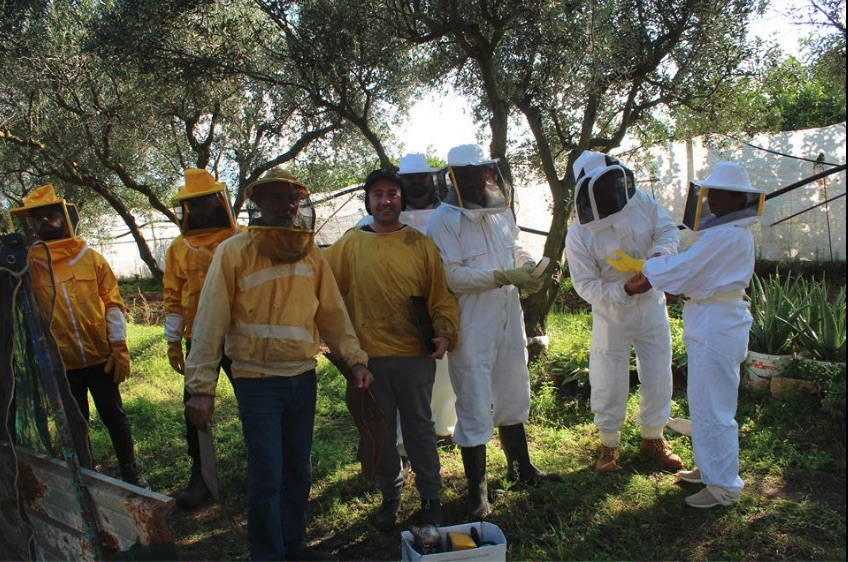 formazione apicoltura