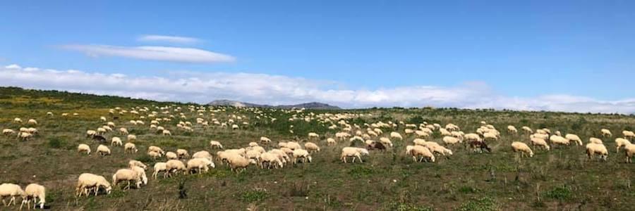 Tg settimanale, notizie in pillole sull'agricoltura, l'agroalimentare e il mondo rurale|Video