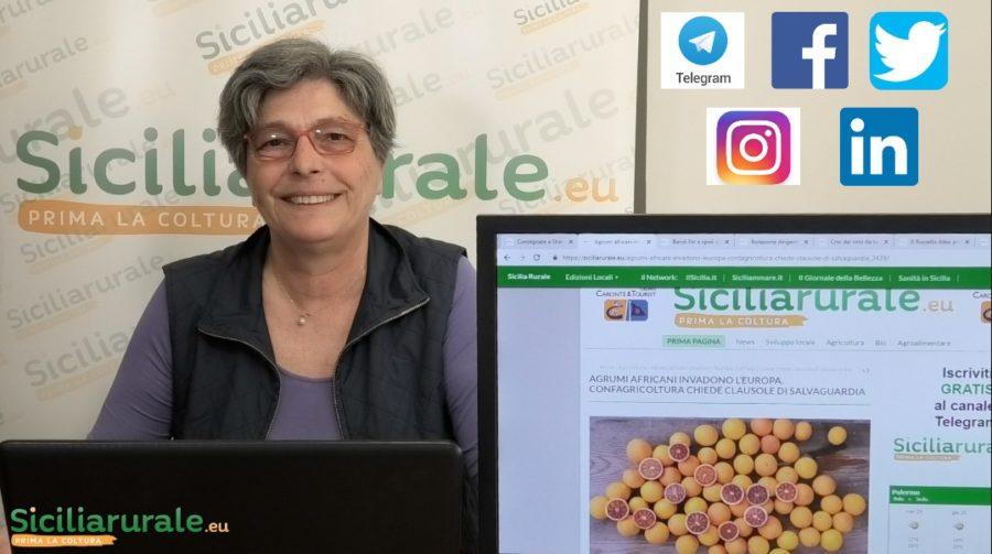 Il tg settimanale: notizie in pillole che parlano di agricoltura e ruralità