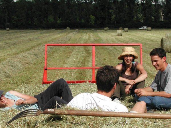 bando Ismea giovani agricoltori