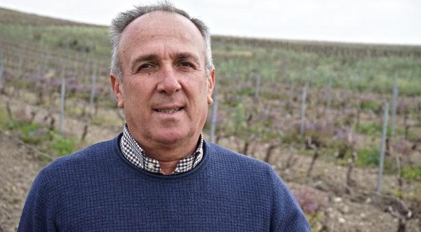 Filippo Paladino Colomba Bianca