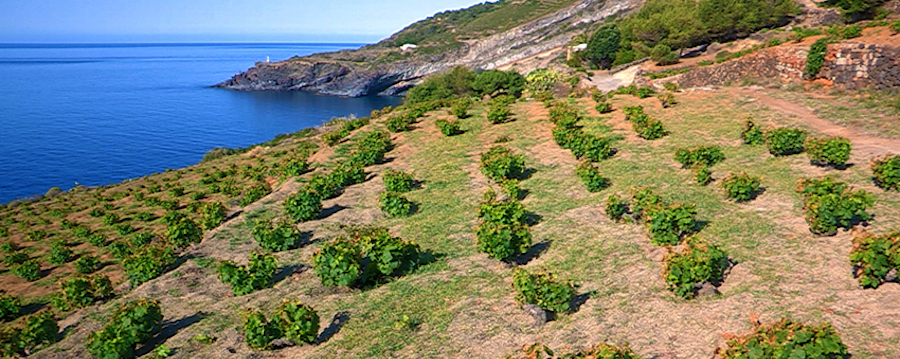 Doc Pantelleria vigneti