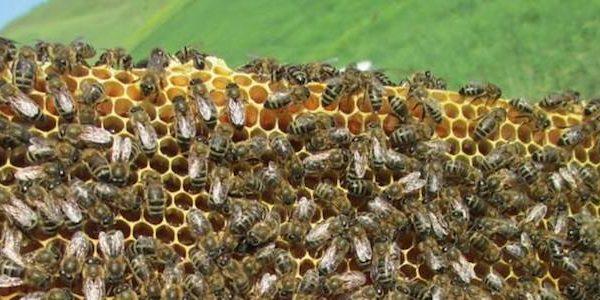 ape sicula ph Claudio Meli