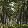 sottomisura 8.1 forestazione
