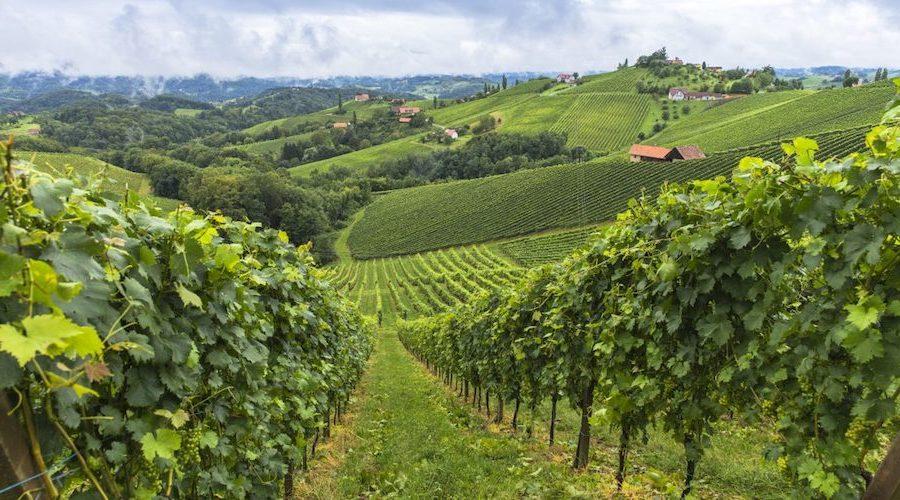 strade-del-vino-Sicilia