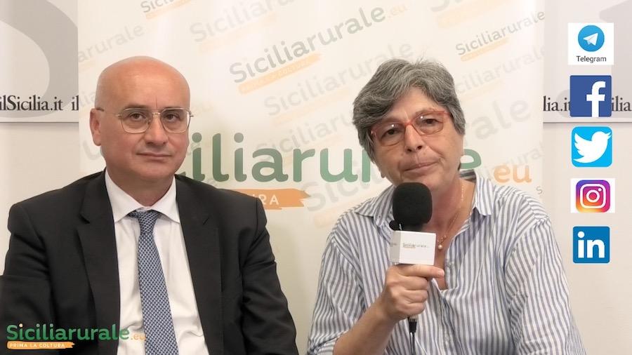 Vino siciliano in bianco e nero: dalla crisi di quello comune alle performance delle Doc | Video