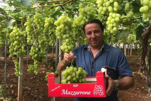Gianni Raniolo uva da tavola Mazzarrone Igp