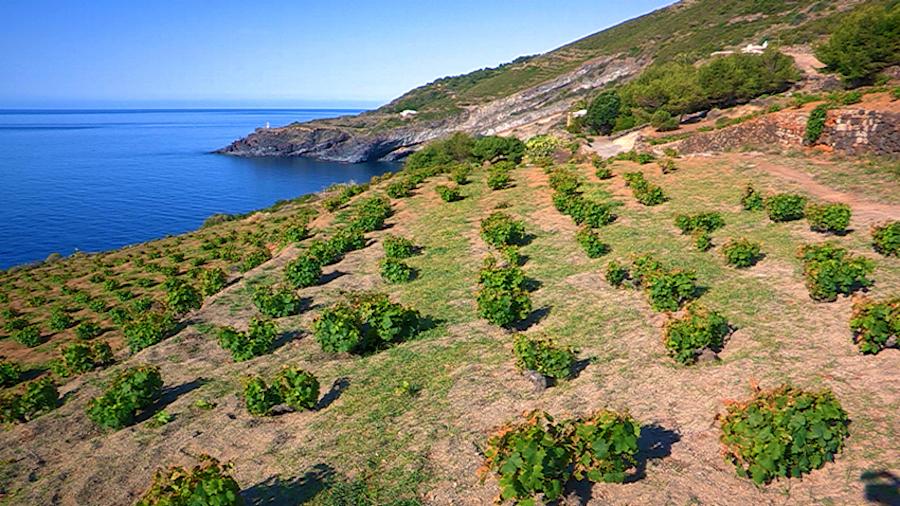 Vigneti a Pantelleria