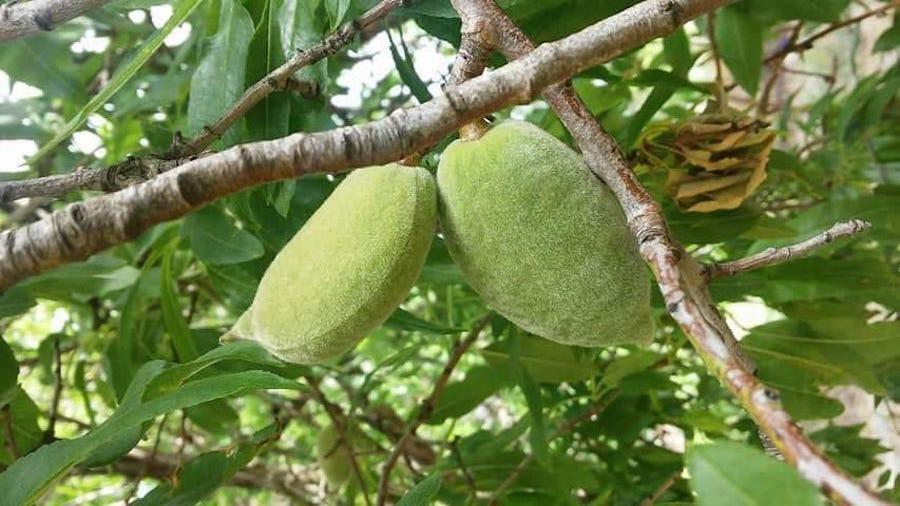 frutta in guscio