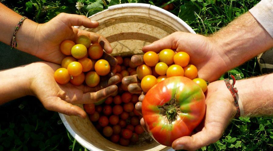 Governance regionale dell'agricoltura