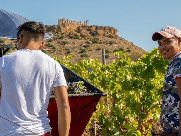 Diodoros vino Valle dei Templi