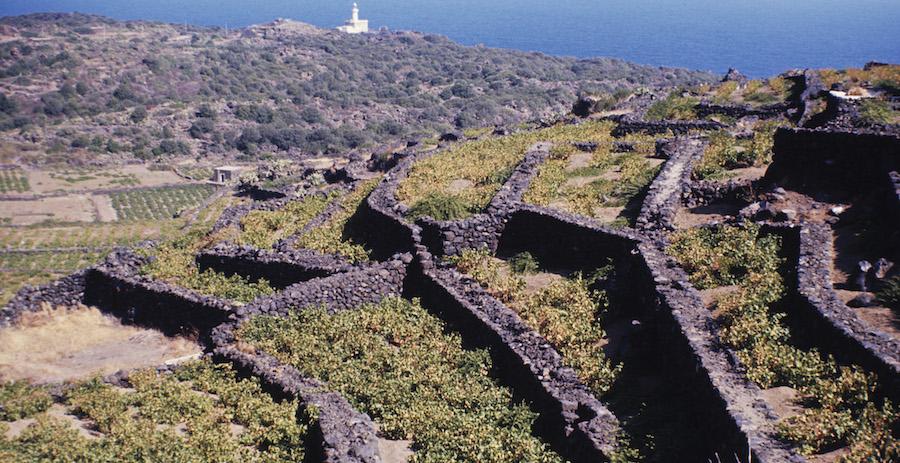 agricoltura policolturale Pantelleria