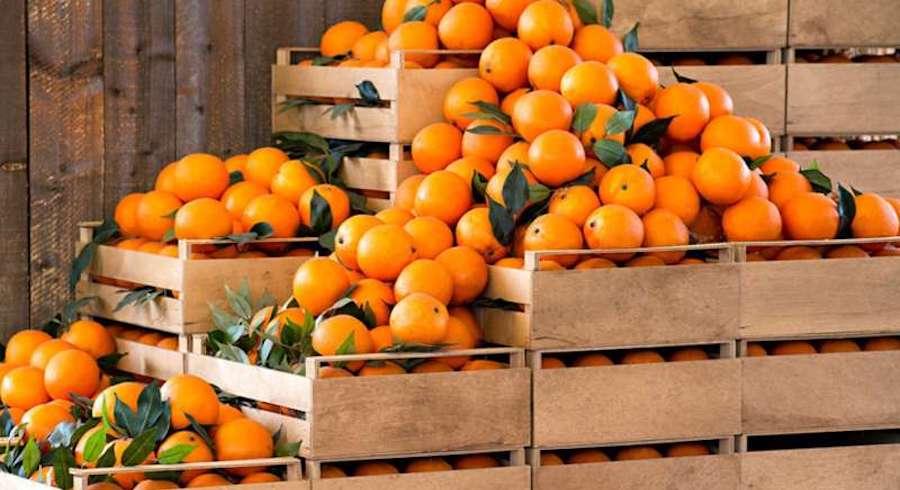 riconversione agrumeti prodotti locali
