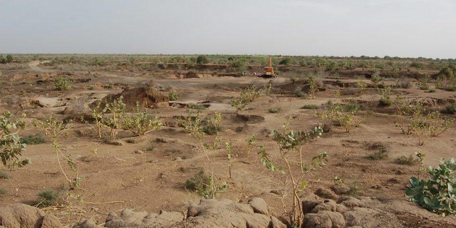 Lotta alla desertificazione in Sicilia, nasce una consulta