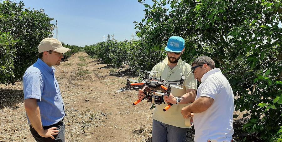 Droni in volo sugli agrumeti siciliani: rilevano lo stress idrico delle piante
