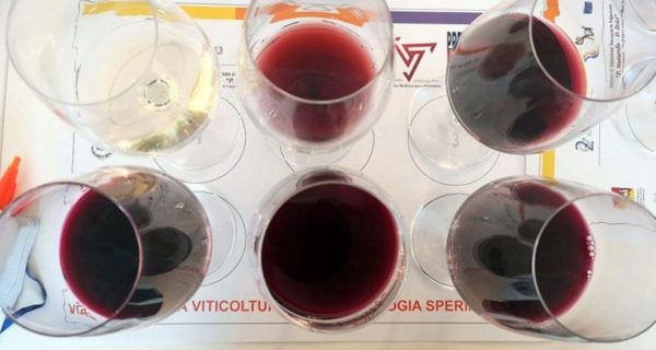 vini da vitigni antichi