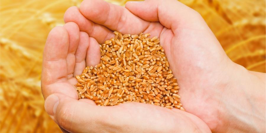 Banca del grano