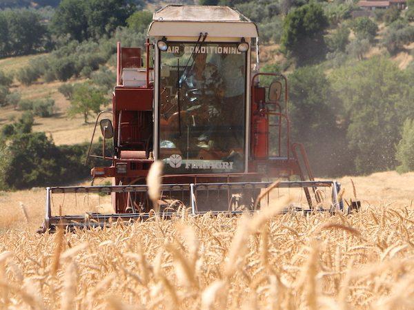 grano duro siciliano