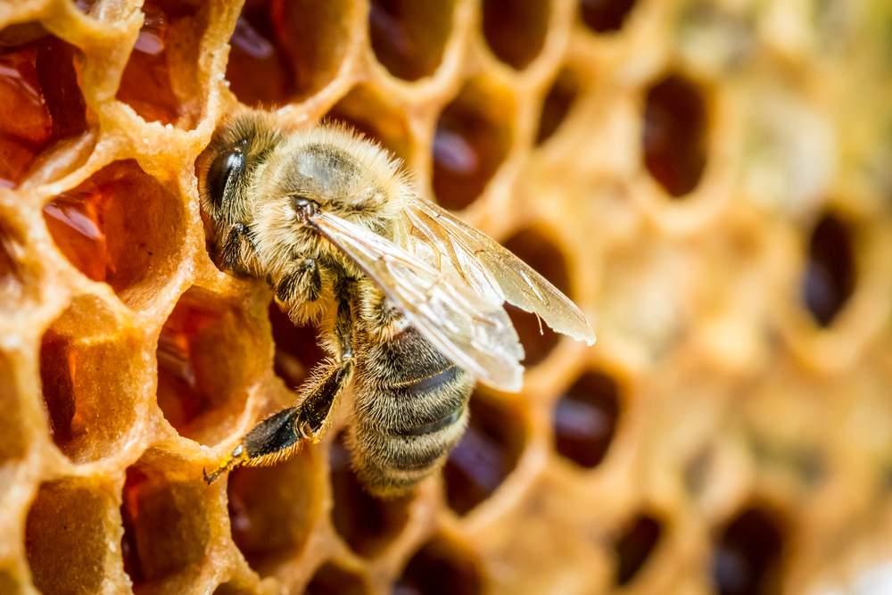 Seicentomila euro dalla Regione per incrementare la produzione di miele