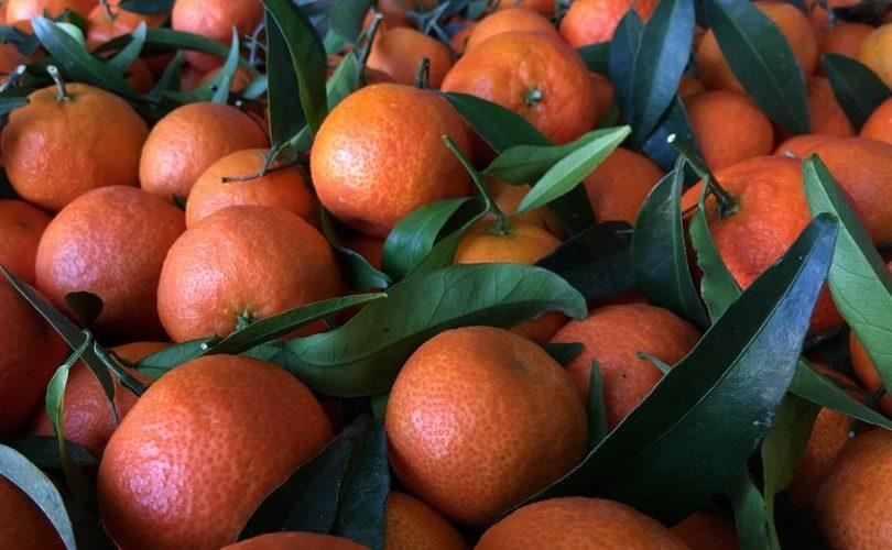 Agroalimentare, arrivano le prime clementine sostenibili