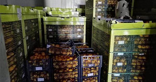 Sequestrate venti tonnellate di limoni provenienti dalla Turchia